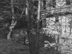 Montclair, NJ, 1982
