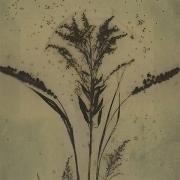 Botanical 08-01, 2008, photogenic drawing