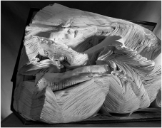 Book Damaged by Water, 2001, gelatin silver print, 20 x 24 inches
