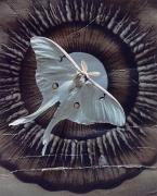 Iris Tropea Luna, 1999