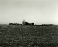 Untitled, from Farm Landscapes, 2011, gelatin silver contact print, 8 x 10 inches