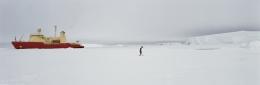 Emperor Penguin, the RVIB Nathaniel B. Palmer, Amundsen Sea, Southern Ocean, Anarctica