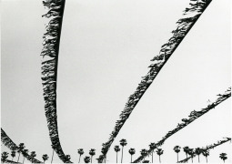 untitled (from the Los Angeles series), 1971