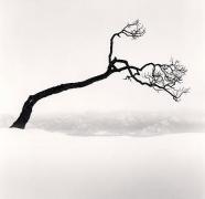 Kussharo Lake Tree, Study 9, Kotan, Hokkaido, Japan, 2009