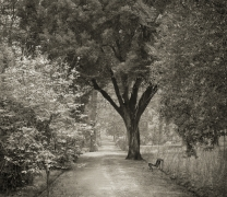 Path, Giardino dei Semplici, Florence, from the series In the Garden
