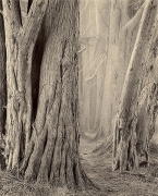 Smugglers Cove Trail - East, Sepia toned gelatin silver print