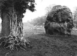 Stone & Tree, Avebury, England, 1967