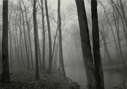 Paul Caponigro Fog and Trees, Redding, Connecticut
