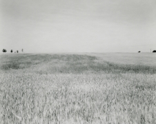 Untitled, from Illinios Landscapes, 1980, gelatin silver contact print, 8 x 10 inches