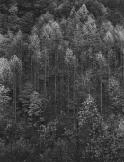 Dawn, Autumn, Great Smoky Mountains National Park, 1948