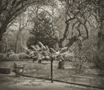 Tree, Giardino dei Semplici, Florence, from the series In the Garden