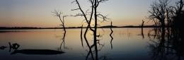 Drowned Trees, Wauby Lake, Day County, South Dakota