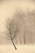 Paul Kozal, Winter, 1995, sepia toned gelatin silver print, 8 x 10 inches