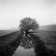 Lyn Way, from the series Farmed, 2013