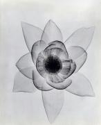 Lotus ca. 1930