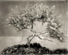 "Bonsai, from the series ""Reconstructions,""platinum palladium print on handmade Japanese gampi, sewn on Japanese washi"