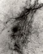 Vela Supernova Remnant POS
