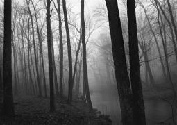 Paul Caponigro Fog and Trees, Redding Connecticut