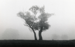 Two Trees, Richmond Park, Surrey, England, 1979