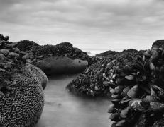 The Tides of El Matador No. 13, 2011