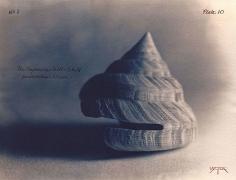 Emperor's Slit Shell, 2003