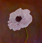 Ranunculus II (Persian Buttercup), hand-colored gelatin silver print, 32 x 32 inches