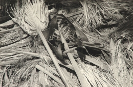Palm Fronds - Pygmy Grove, Anza Borrego, 2005