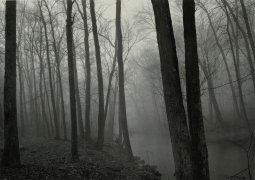 Fog and Trees, Redding, Connecticut, 1968, vintage gelatin silver print