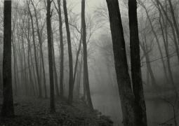 Fog and Trees, Redding, Connecticut, 1968, vintage gelatin silver print