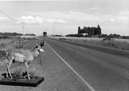 Near Burns, Oregon, 1984