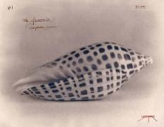 The Juonia, 2005