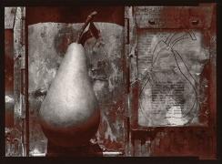 Bosc, 1977, From Ephemera Portfolio, Toned gelatin silver print