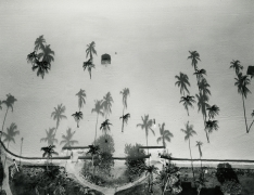 Palm Trees, Miami, FL, 1987