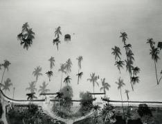 Palm Trees, Miami, FL, 1987