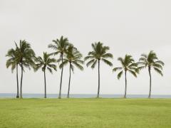 Beach Park Hawaii, 2013