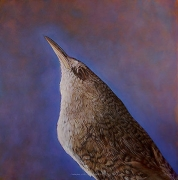 Kate Breakey, Canyon Wren, hand colored gelatin silver print