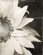 "Sunflower, from the series ""Reconstructions,""platinum palladium print on handmade Japanese gampi, sewn on Japanese washi"