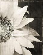 "Sunflower, from the series ""Reconstructions,""platinum palladium print on handmade Japanese gampi, sewn on Japanese washi"