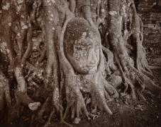 Entwined Buddha, Ayuttaya, Thailand, toned gelatin silver print