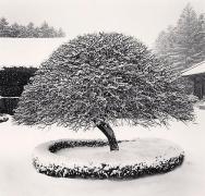 Snow Tree, Woljeongsa Temple, Gangwando, South Korea, 2005