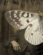 Parnassius apollo, 2007