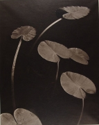 Floating Leaves, Boundary Water, MN, 1999,