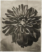 "Dahlia, from the series ""Reconstructions,""platinum palladium print on handmade Japanese gampi, sewn on Japanese washi"