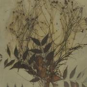 Botanical 08-04, 2008, photogenic drawing
