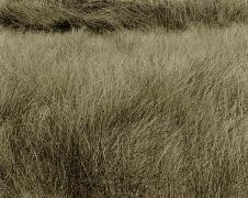 Summer Grass, Lozere, France, 1996,