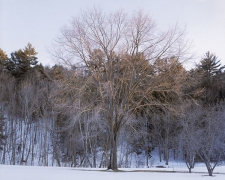 Winter Light, New Hampshire