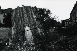 Cut Tree, Rochester, 1973