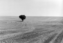 Near Ritzville, Adams County, Washington, 1980