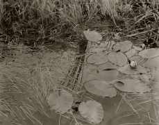 Water Lily, Quebec, Canada, 1992