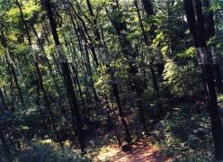 Slanting Forest, Lewiston, New York, 1975